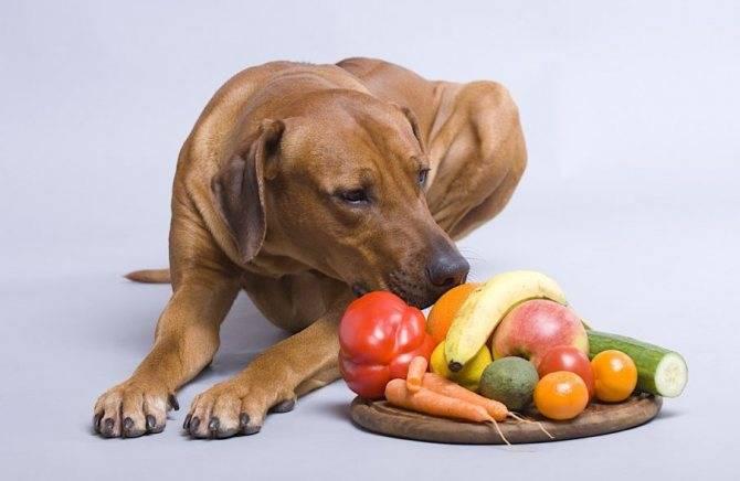 Какие фрукты можно давать собаке