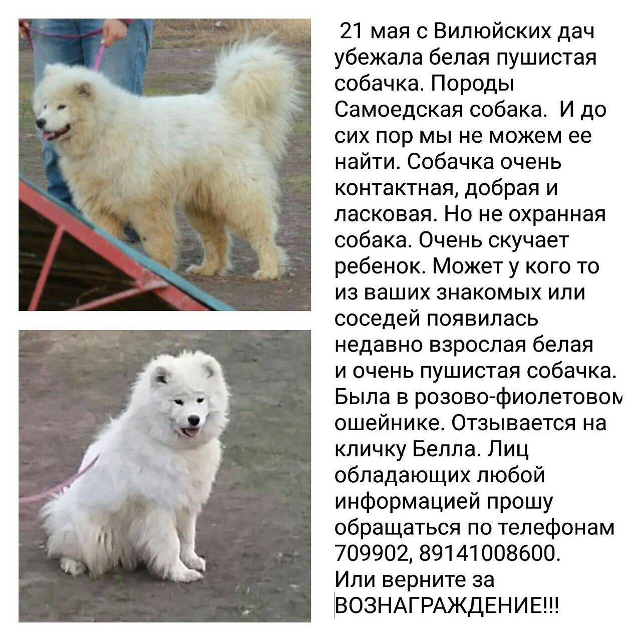 Белые породы собак с фото и описанием