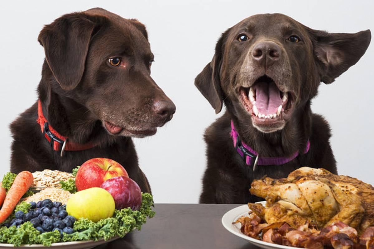 Можно ли собакам есть человеческую еду | фрукты, овощи