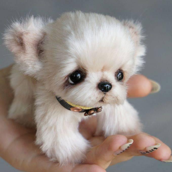 Обзор самых милых и красивых пород собак в мире с описанием внешности
