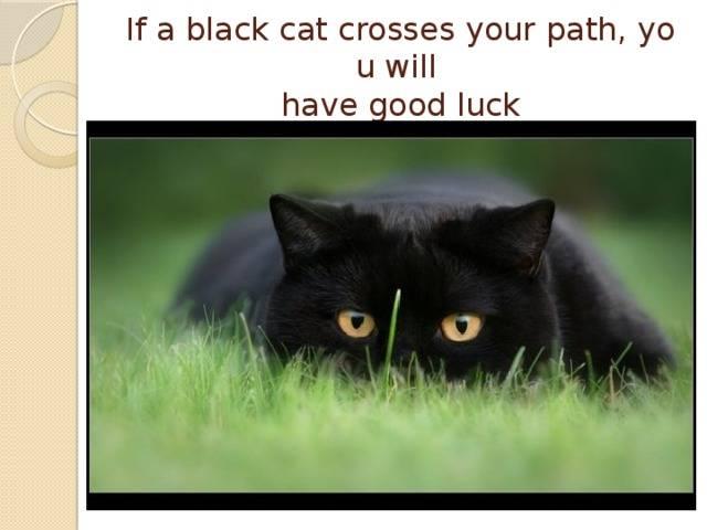 Черный кот в доме, на пути, у двери – приметы и суеверия