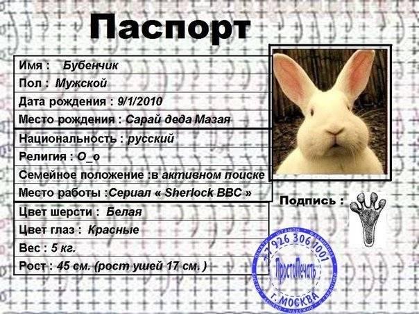 Как назвать кролика: подбираем имя для питомца