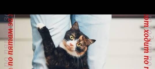 Почему кошка ходит за хозяином по пятам?
