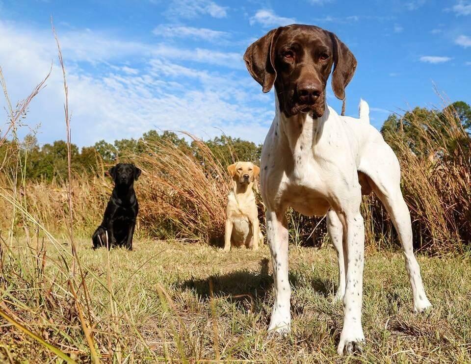 Собаки для охоты — топ 20 пород
