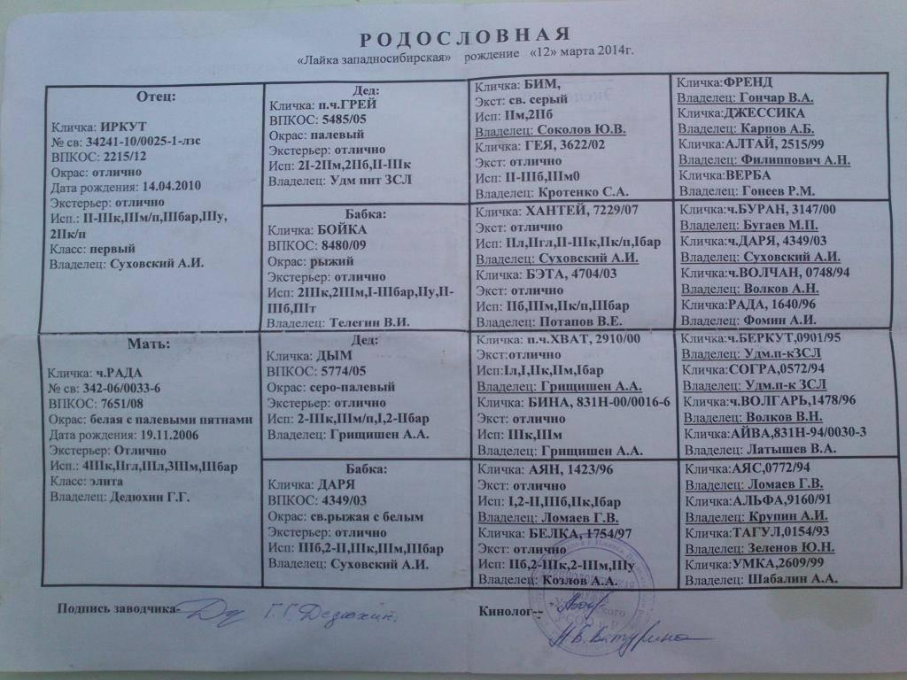 Описание породы западно-сибирская лайка с фото