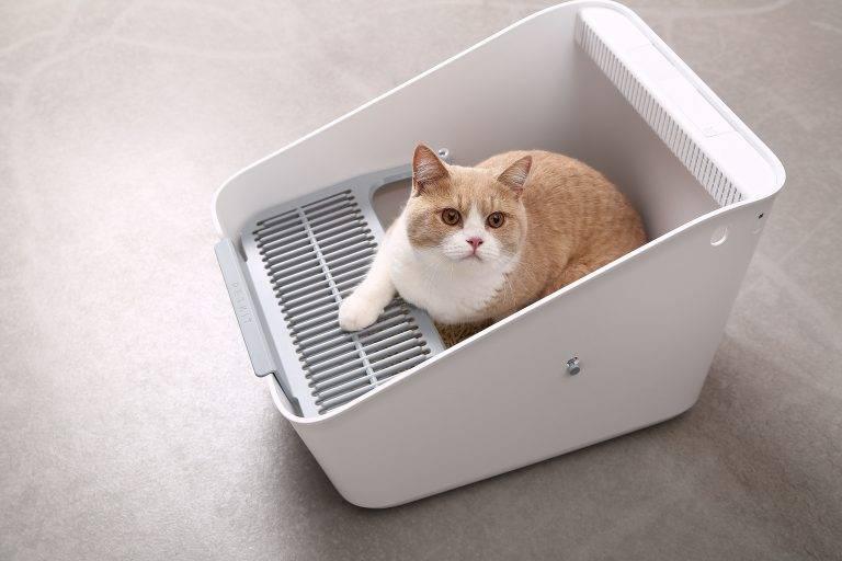 Как отучить котенка гадить где попало, а использовать лоток